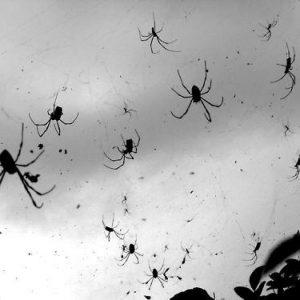 Ragni potrebbero mangiare tutta la razza umana in un anno ma...non lo fanno