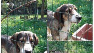 Poldo, il cane inconsolabile cerca casa: il suo padrone si è ucciso