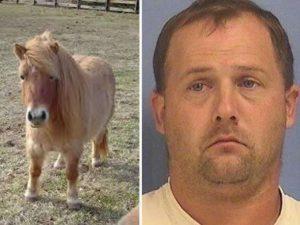Uomo ha un rapporto con un pony, scoperto di notte nella stalla...