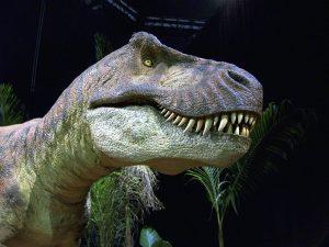 Tirannosauri si baciavano: il muso era la parte sensibile