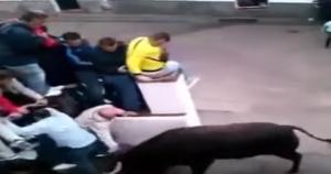 Toro travolge uomo durante una corsa cittadina: poi lo afferra per le corna