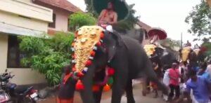 Elefante dà calcio a spettatore mentre sfila decorato alla parata
