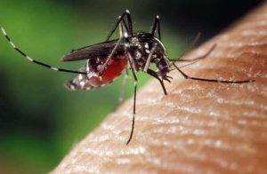 Zanzare, già arrivate: mangia birra e hamburger e ti pungono, mangia pompelmo e ti evitano