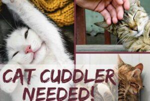 Coccolatore di gatti cercasi: stipendio da 25mila euro l'anno