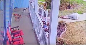 Alano troppo grande: anziana vola giù dal porticato