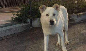 """M5S """"animalista"""" chiede p**e più severe sui maltrattamenti. Il caso del cane Angelo"""