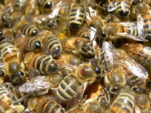 Reggia di Carditello, api diventano sentinelle dell'ambiente