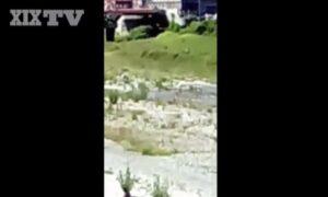 Genova, dopo i cinghiali ecco i camosci a passeggio per la città