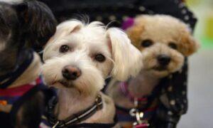 Cina, il governo vuole proibire la vendita di carne di cane