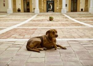 Antonio Sandano morto in casa: il suo cane l'ha vegliato e continua ad aspettarlo