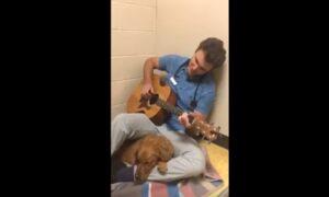 Una serenata prima dell'intervento: così il veterinario calma il cane