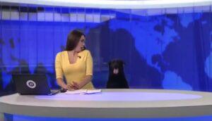 YOUTUBE Russia, cane in studio: conduttrice sgrana occhi dallo spavento