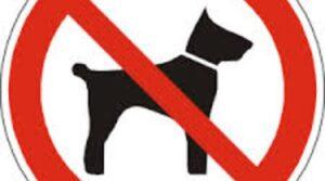 """Bogliasco, divieto di accesso ai cani. Turisti protestano: """"Ridicolo"""""""