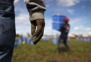 Caporalato, profughi sfruttati nei campi a Cosenza: 15 euro per 10 ore