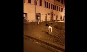 YOUTUBE Roma, una capra a passeggio a Largo Argentina. La reazione del tassista