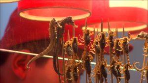 Cinesi stanno sterminando i cavallucci marini per la loro medicina