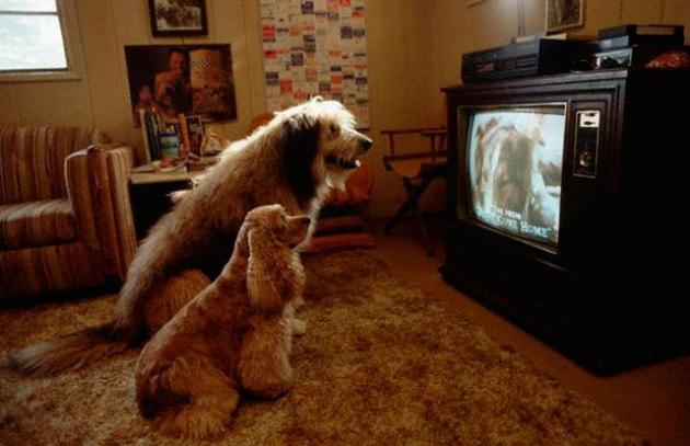 Dog Tv, il canale che fa compagnia al cane quando non ci sei