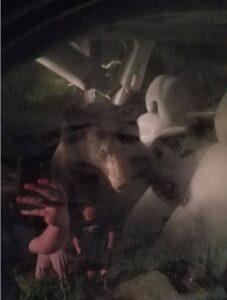 Orso intrappolato nell'auto suona il clacson: la polizia lo libera