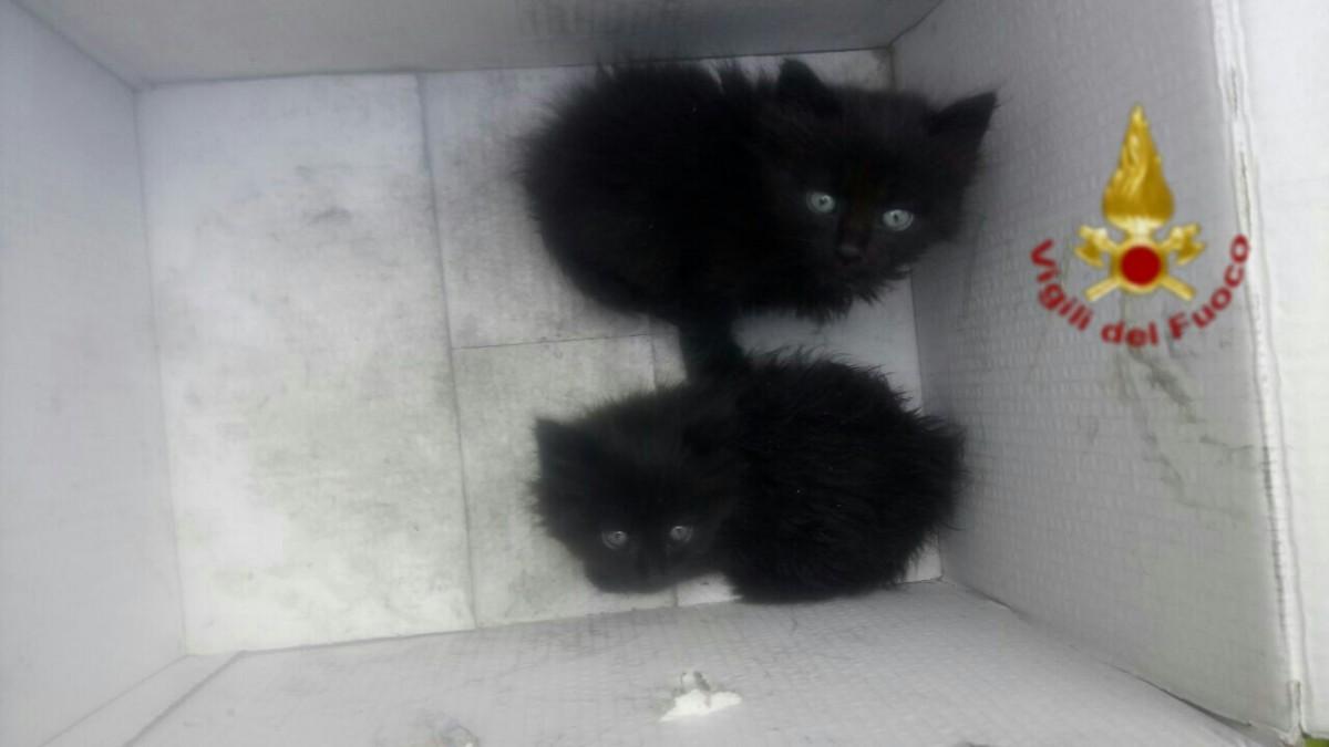 Incendio Pomezia, gattini salvati dal rogo a Eco X: erano nascosti in un capannone