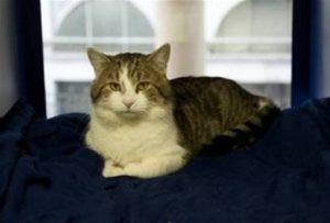 Genova, gatto conteso tra due vicine: a decidere sarà il giudice