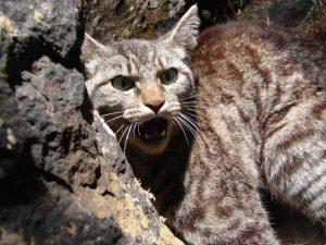 Cani e gatti predatori, Michele Emiliano sotto accusa per il progetto di legge