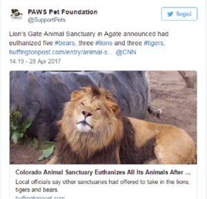 """Colorado, uccidono gli undici animali della riserva per motivi """"burocratici"""""""