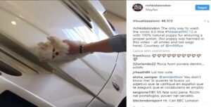 Rich Kids lucidano la Maserati usando un cucciolo di maltese