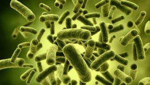 Microbi africani, è invasione. Ma non ci ammalano, ci curano