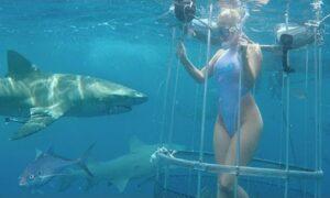 YOUTUBE La modella viene attaccata da uno squalo durante il servizio fotografico subacqueo