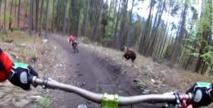 YOUTUBE Un grosso orso rincorre i mountain biker nel bosco