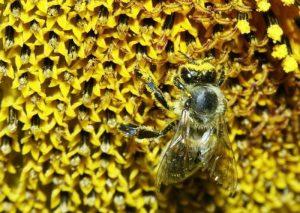 Modena, sciame di 40mila api invade bar: paura tra clienti e passanti