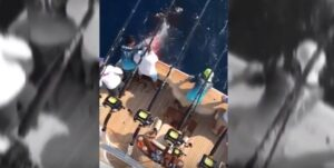 Messico, figlio miliardario uccide squalo tigre a colpi di pistola