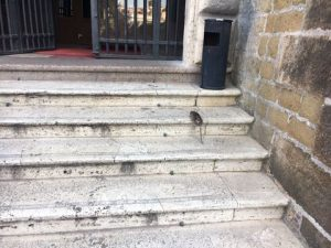 """Topi sulle scale del Campidoglio, la foto. """"Vanno dall'assessore..."""""""