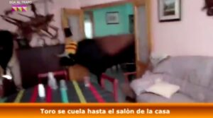 YOUTUBE Toro in fuga dalla corsa entra in una casa e la distrugge: panico a Valencia