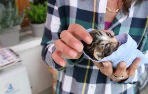 """Francia, strage di gatti: """"Duecento mici avvelenati in due mesi"""""""