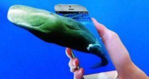 """Ristorante """"Balena blu"""" scambiato online per la centrale dei suicidi Blue Whale"""