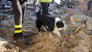 Camilla, morto il cane del terremoto: altri cani avevano dato il sangue per lei