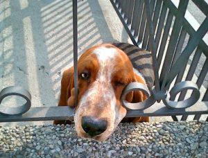 Milano, il cane muore lanciandosi dal balcone: senz'acqua, sotto il sole cocente...