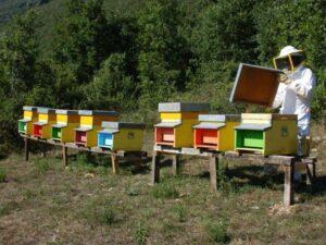 Punta dalle api, donna di 49 anni muore per shock anafilattico