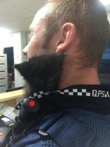 """Gatto nero salvato dai poliziotti di Brisbane: diventa """"assistente"""" per un giorno"""