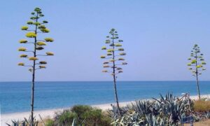 Calabria, le spiagge più belle e bandiera blu nel 2017